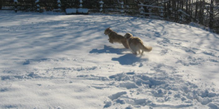 Rosie running with Penny in the snow